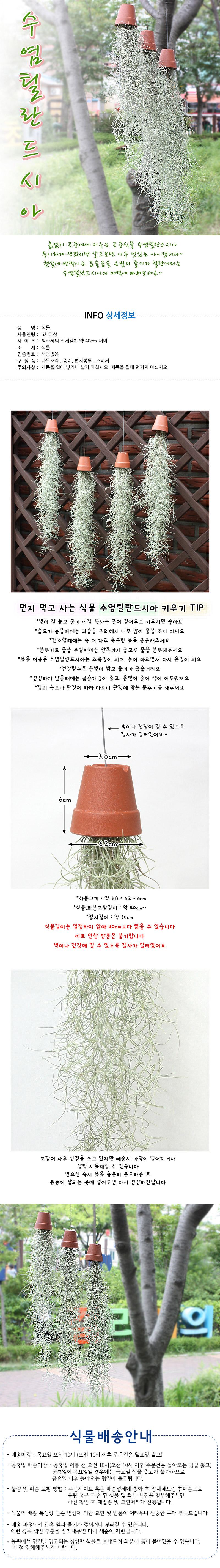 공기정화식물-수염틸란드시아 - 에코키즈, 8,000원, 허브/다육/선인장, 공기정화식물