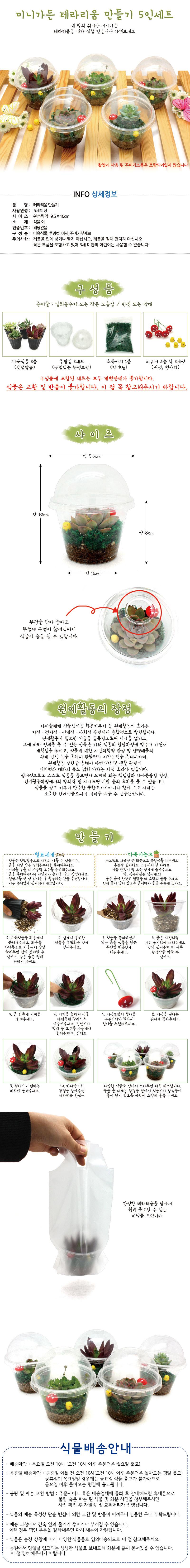 미니가든 테라리움 만들기 (5인세트) - 에코키즈, 20,000원, 허브/다육/선인장, 다육/선인장